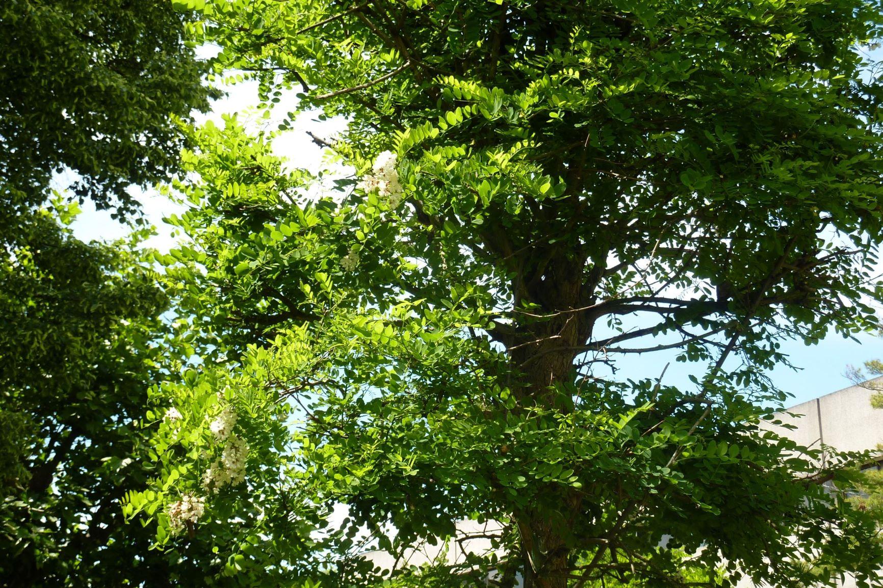 Parcours arbres