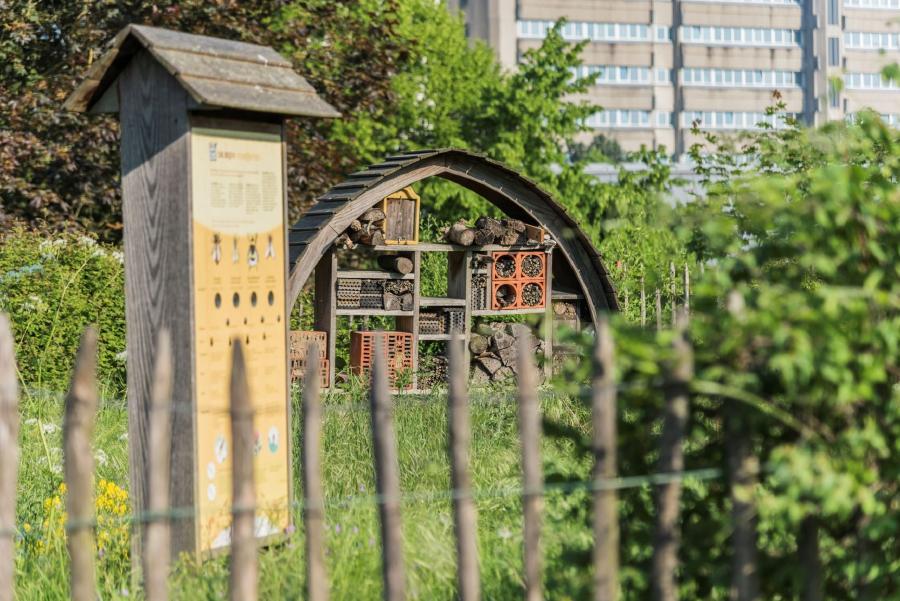 Village des abeilles sauvages